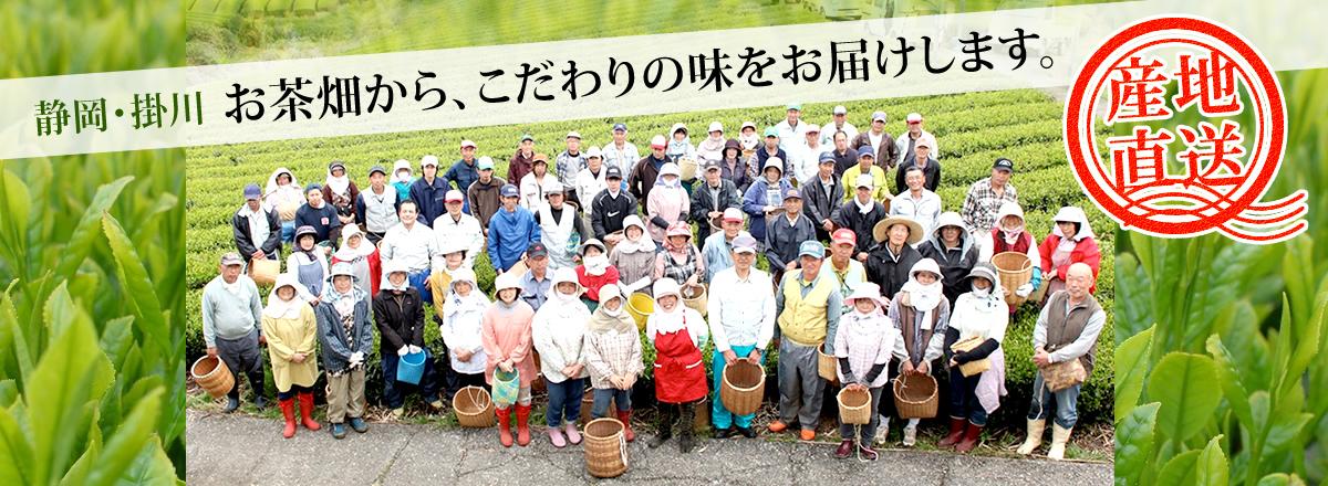 静岡県掛川市から産地直送のお茶をお届
